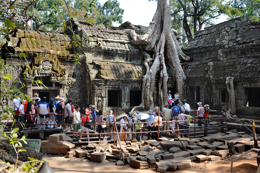 Ta Prohm tree on Gopuram