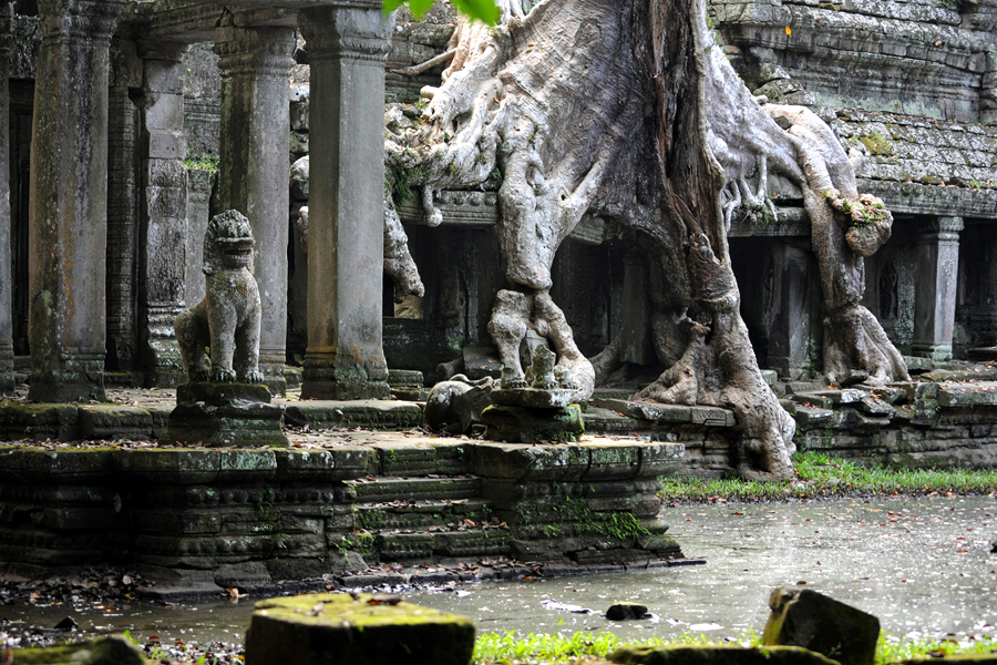 Preah Khan lion and tree